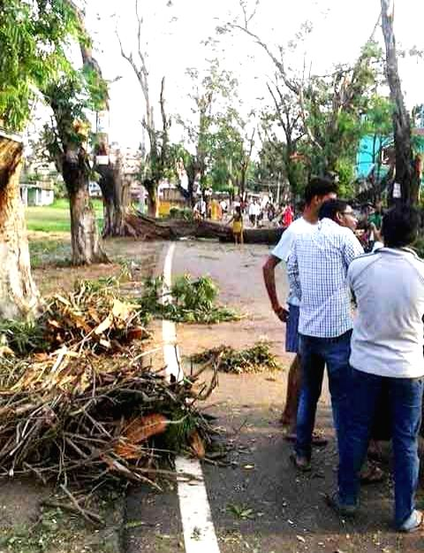 Katihar: The trees uprooted in a storm that lashed several districts of Bihar late on Tuesday night (22nd April 2015) block a portion of road in Katihar on April 22, 2015. At least 32 people ...