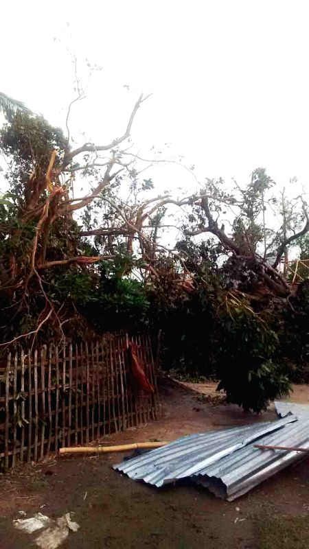 The trees uprooted in a storm that lashed several districts of Bihar late on Tuesday night (22nd April 2015) in Katihar on April 23, 2015. At least 32 people have been killed and around 100 ...