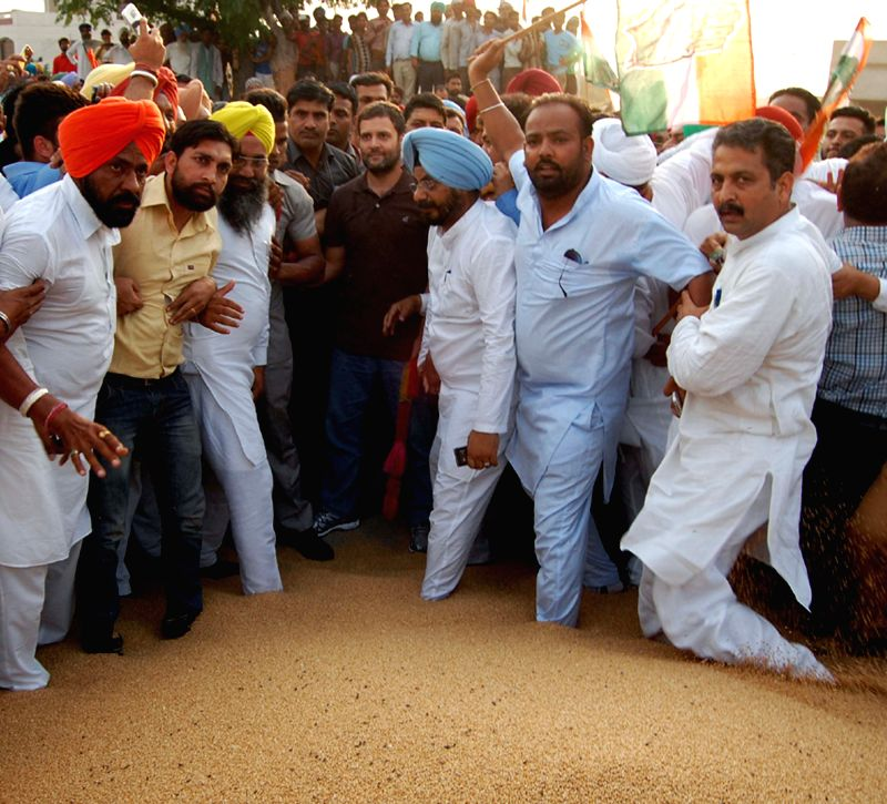Congress vice president Rahul Gandhi interacts with farmers at Khanna Mandi (grain market) in Ludhiana district of Punjab on April 28, 2015.