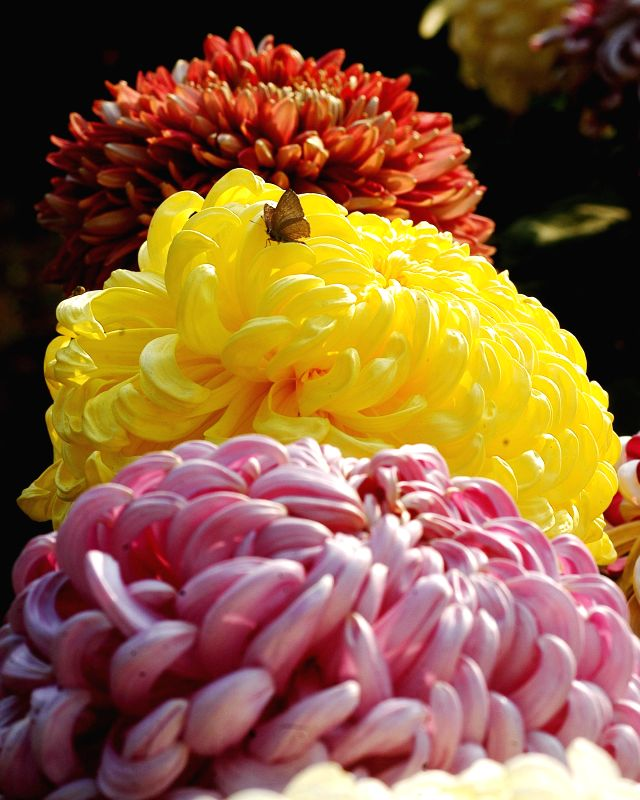 A flower show organised at West Bengal Assembly in Kolkata on Dec 23, 2014.