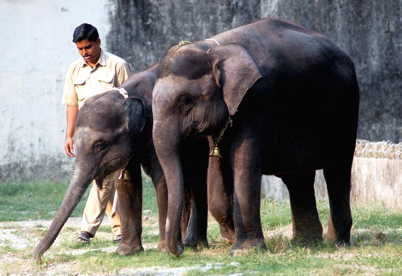 Cow-elephants Rani and Titi in their enclosures at Alipore Zoological Gardens in Kolkata, on Nov 27, 2014.