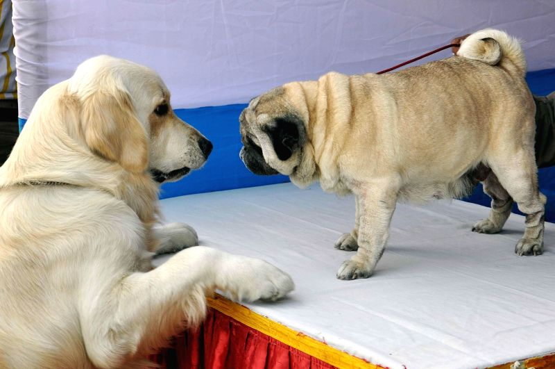 Dogs at a dog show organised at Salt Lake central park in Kolkata, on Jan 25, 2015.