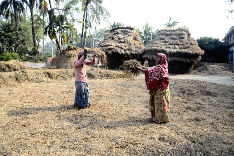 :Kolkata: Farmers busy in their day-to-day agricultural activities in Kolkata on Feb 1, 2018. In the Union Budget 2018-19, Finance Minister Arun Jaitley's focus was on rural India and ...