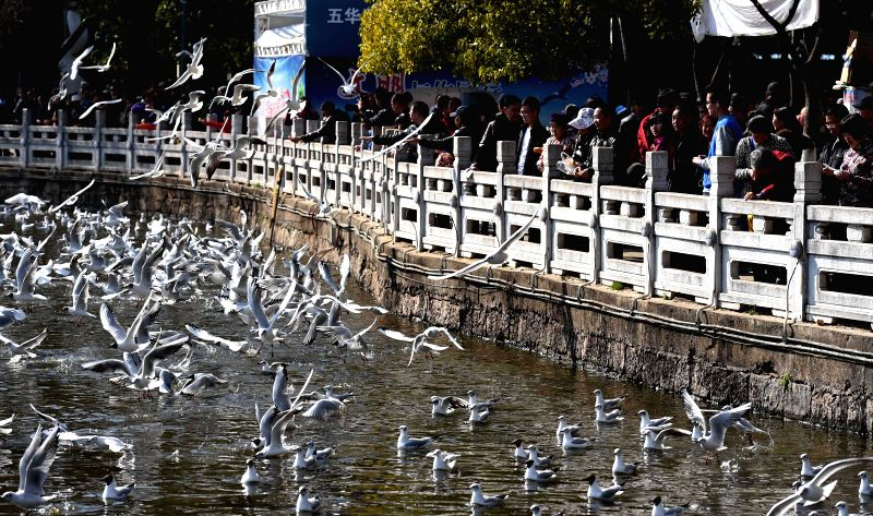Visitors feed black-headed gulls at Cuihu Park in Kunming, capital of southwest China's Yunnan Province, Feb. 19, 2015, the first day of the Chinese Lunar New ...