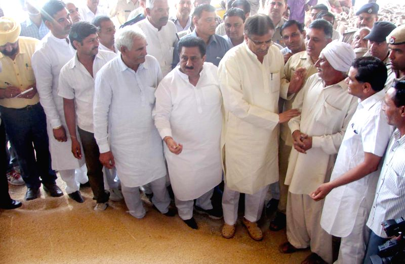 Haryana agriculture minister OP Dhankar inspects the wheat arrival at Anaj Mandi in Pipli, Kurukshetra on April 23, 2015.