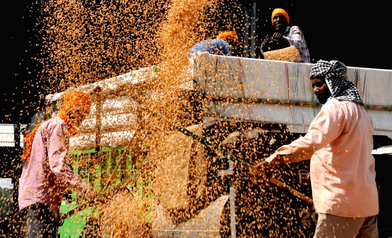 Labourers sort wheat crops at a grain market in Amritsar on April 18, 2017.