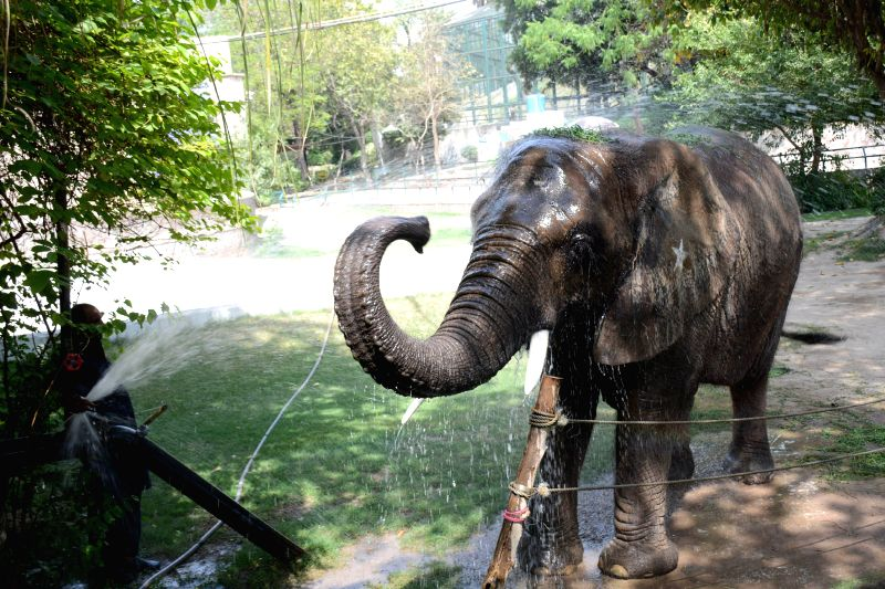 LAHORE, April 19, 2017 - A zoo employee gives bath to an elephant during heat wave in eastern Pakistan's Lahore, on April 19, 2017. (Xinhua/Sajjad)