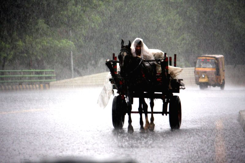 A laborer rides on a horse-cart during heavy rain in east Pakistan's Lahore, Aug. 1, 2014. The Meteorological Department of Pakistan on Friday predicted monsoon rains