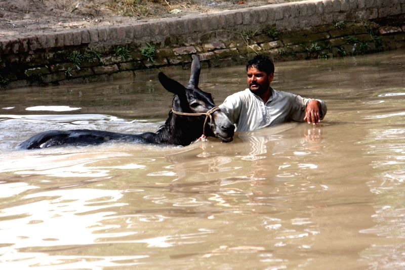 LAHORE, May 27, 2017 - A man cools off with his donkey at a canal as temperature reached 45 degrees Celsius in eastern Pakistan's Lahore, on May 27, 2017.