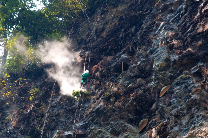 Honey hunters use an acrid smoke to drive the bees from their nest at a cliff at Lamjung, Nepal on April 25, 2014. Honey hunting is an age-old tradition here in ...