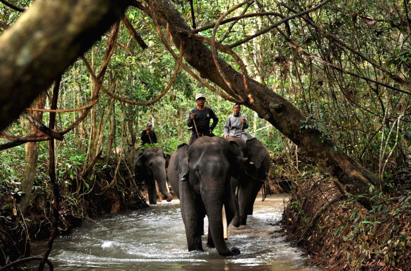 LAMPUNG, July 29, 2017 - Mahouts ride elephants at Way Kambas National Park in Lampung Province, Indonesia, July 29. 2017.