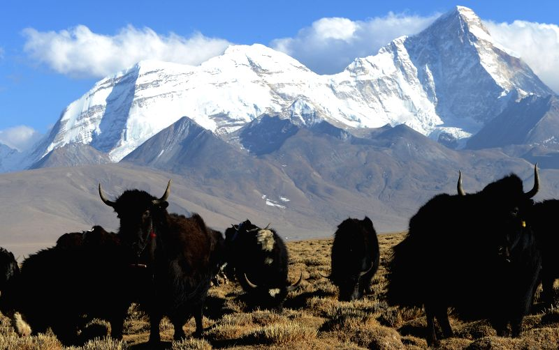 Photo taken on April 21, 2014 shows the Mount Jomolhari, a mountain in the Himalayas, in Yadong county, southwest China's Tibet Autonomous Region.  ...