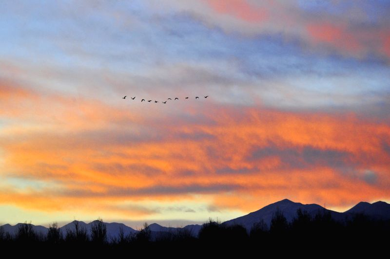Lhasa (China): Geese fly in the sky tinted by the sunset glow in Linzhou County of Lhasa, capital of southwest China's Tibet Autonomous Region, Nov. 27, 2014.