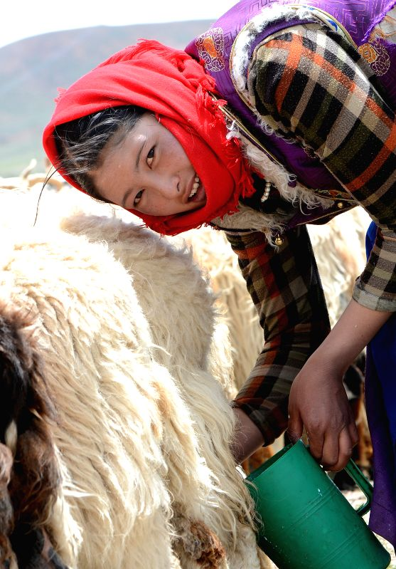 A local villager washes her hands before milking sheep at Namco Township of Damxung County in Lhasa, capital of southwest China's Tibet Autonomous Region, June 20, ...