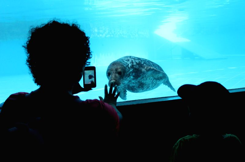 A visitor takes pictures of one of the seals in the Park of Legends in San Miguel district, Lima department, Peru, on March 18, 2015. The Park of Legends received a ...