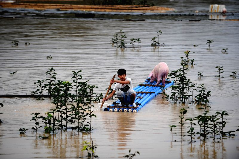 A young boy transfers a pig as rain-triggered flood hit Lishui City, east China's Zhejiang Province, Aug. 20, 2014.