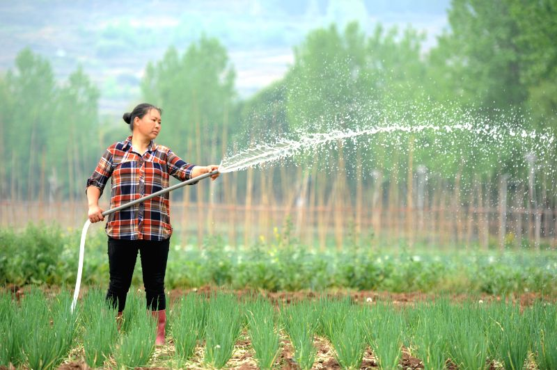 LIUPANSHUI, April 20, 2017 - A farmer works at a vegetable base at Dahe Township in Liupanshui City, southwest China's Guizhou Province, April 20, 2017. Farmers were busy with planting these days, as ...