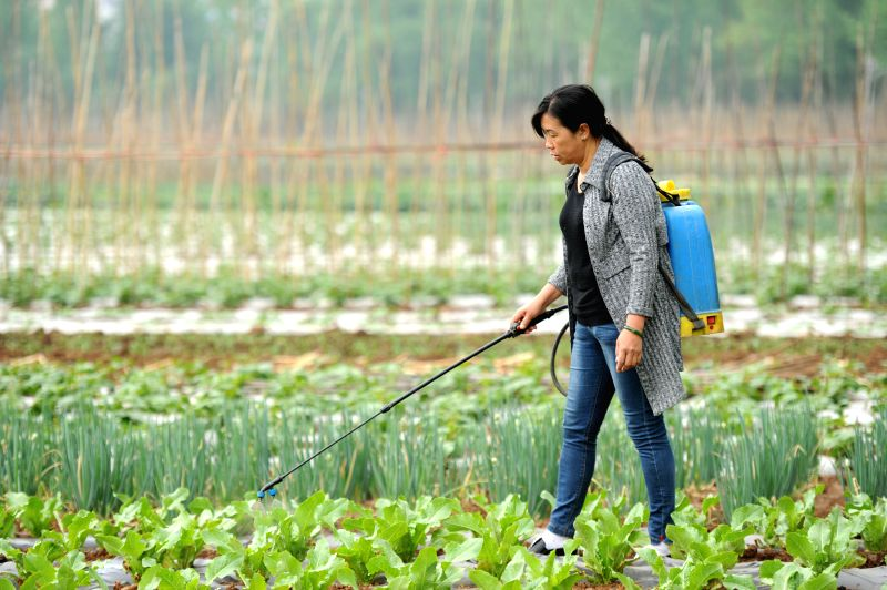 LIUPANSHUI, April 20, 2017 - A farmer works at a vegetable base in Dahe Township in Liupanshui City, southwest China's Guizhou Province, April 20, 2017. Farmers were busy with planting these days, as ...
