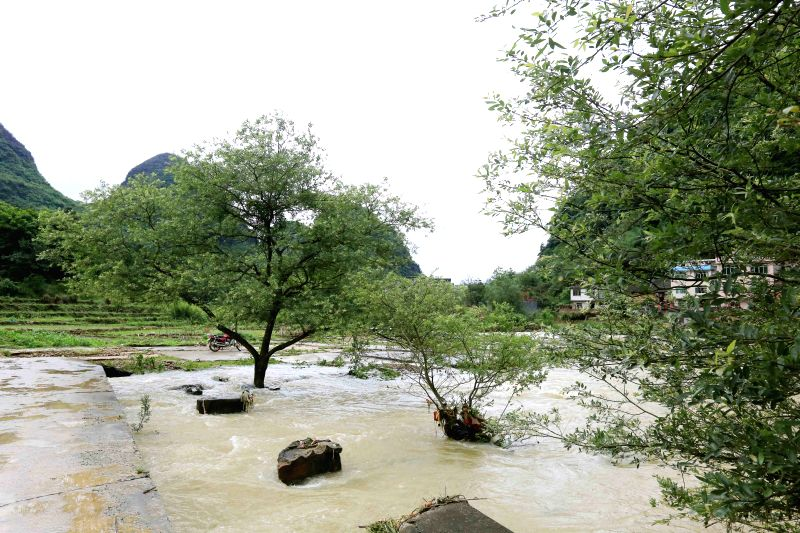 Photo taken on May 11, 2014 shows the flooded trees in Qiaoban Village of Liuzhou City, southwest China's Guangxi Zhuang Autonomous Region, May 11, 2014. ...