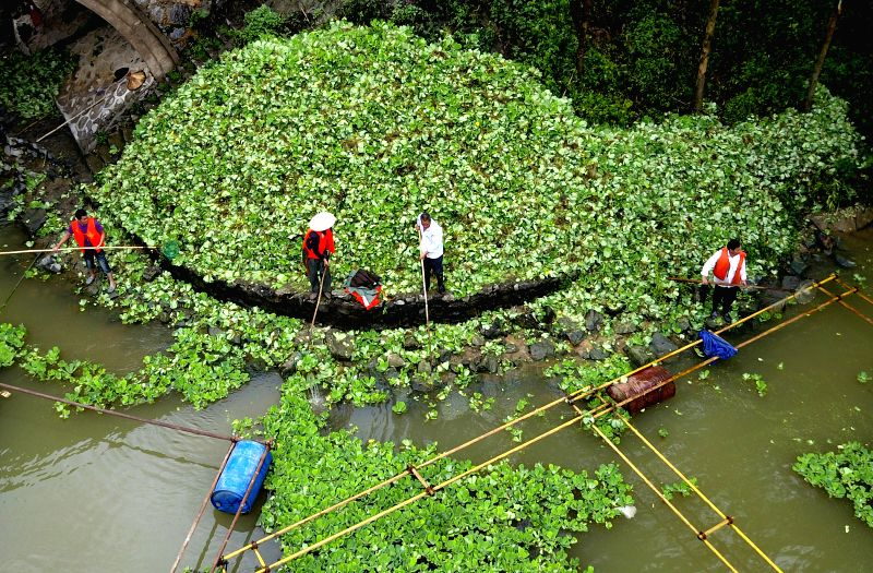 LIUZHOU, May 9, 2017 - Cleaners clear the water hyacinth, a rapidly growing floating plant, to protect the water environment on the Langjiang River in Liuzhou City, south China's Guangxi Zhuang ...