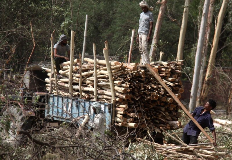 Logs being loaded after cutting of trees for widening of road. (File Photo: IANS)