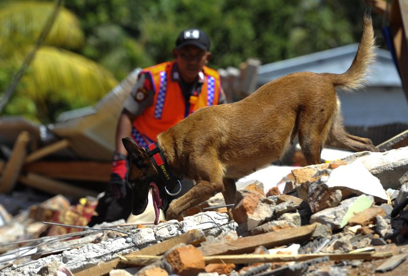 LOMBOK, Aug. 8, 2018 - A rescue dog searches for victims in the rubble caused by earthquake in North Lombok, West Nusa Tenggara province, Indonesia, Aug. 8, 2018.