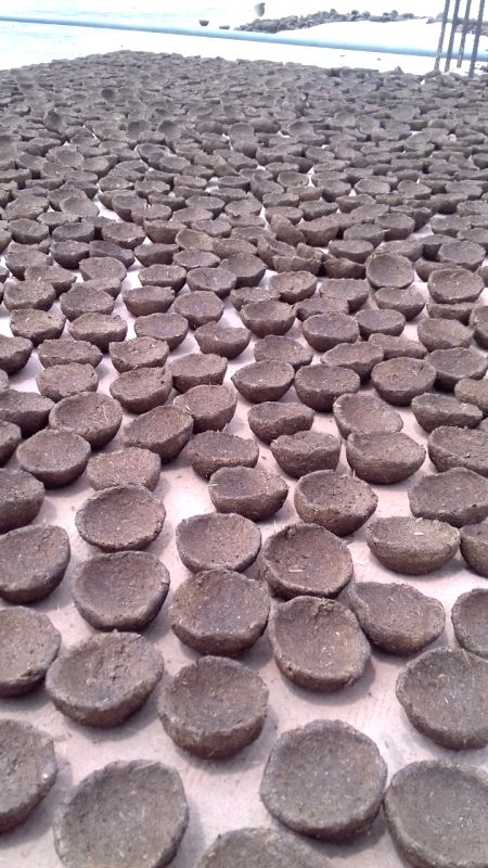 Lucknow, Oct 24 (IANS) Besides being used in making dung cakes, fertilizer and bio-gas, cow dung is also generating employment in Uttar Pradesh.