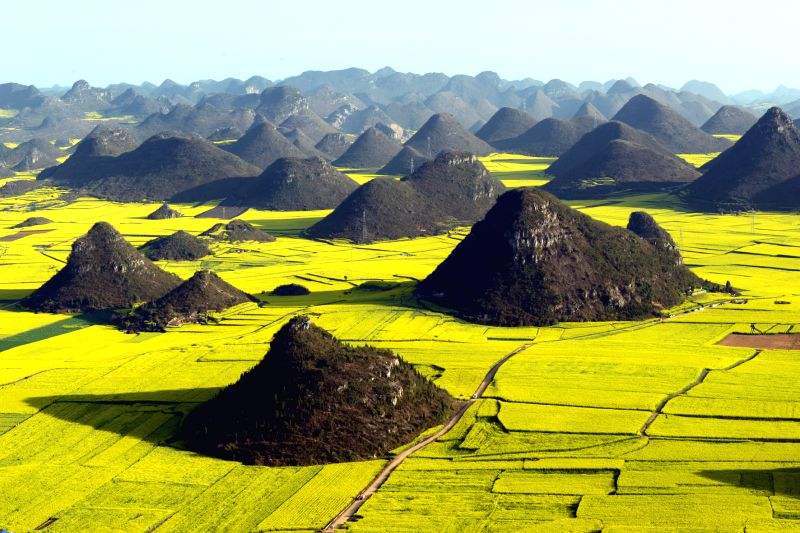 Photo taken on Feb. 25, 2015 shows the scenery of rape fields and hills in Luoping County, southwest China's Yunnan Province. (Xinhua/Mao Hong)