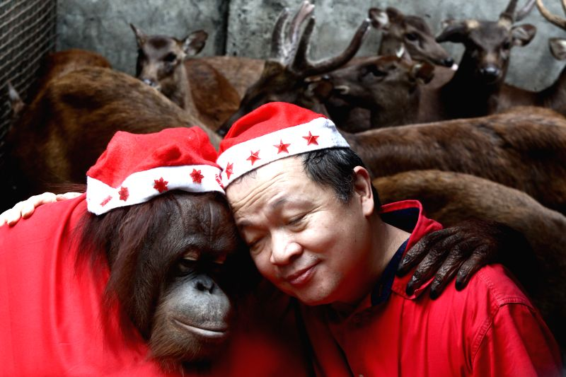 "An orangutan dressed in Santa Claus costume hugs Filipino-Chinese zoo owner Manny Tangco in front of reindeers during the ""Animal Christmas Party"" ..."