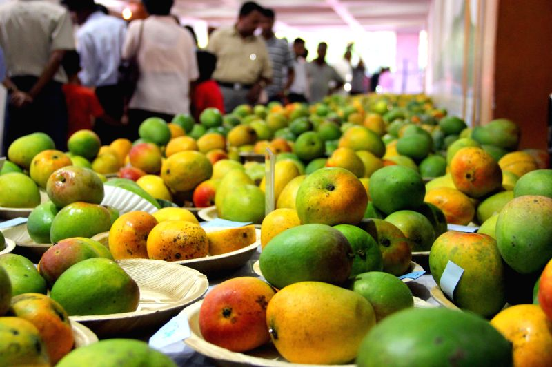 Mangoes on display during Mango Festival held at Kala Academy in Panaji on May 13, 2014. Some 1600 mangoes of 23 variety were exhibited along with mango saplings and other products mango.