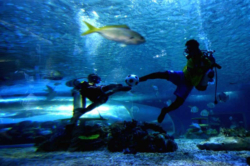 Divers play football as an added attraction for football fans following the FIFA World Cup 2014 in Brazil inside the Manila Ocean Park in Manila, the Philippines, ...