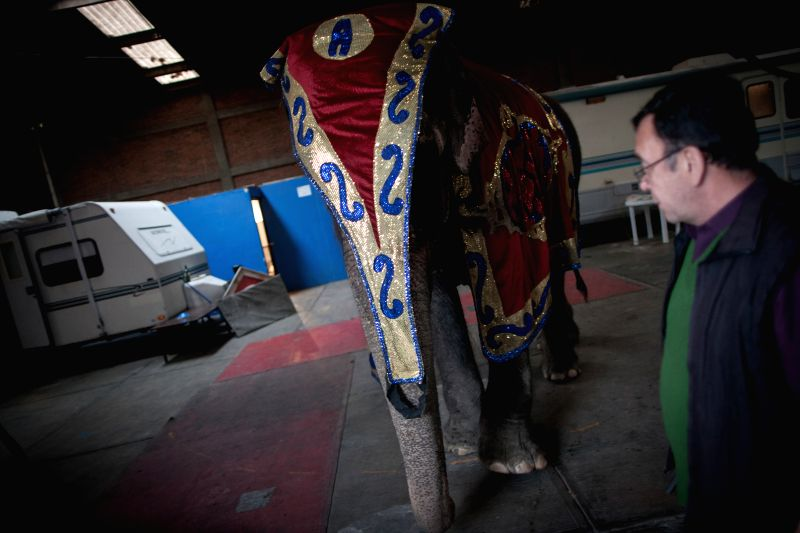 Photo taken on Aug. 8, 2014 shows a man watches an elephant in a circus in Mexico City, capital of Mexico. Mexico City, the capital of Mexico issued a ban that .