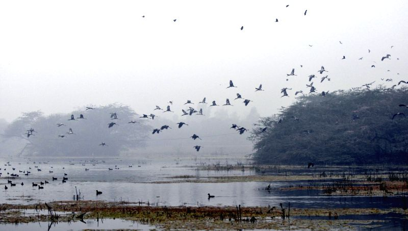Migratory birds fly at the Sultanpur National Park, a bird sanctuary located on Gurgaon-Farrukhnagar Road, on Jan 23, 2016.