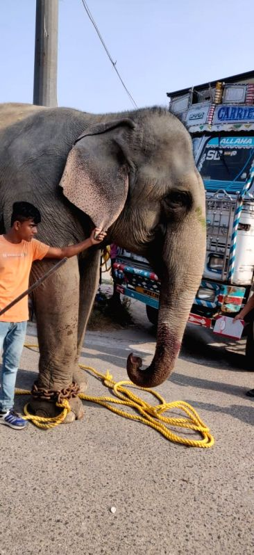Missing elephant found near Delhi police headquarter.