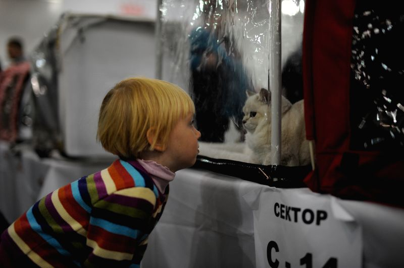 Moscow (Russia): A kid watches a cat on the Grand-prix Royal Canin International Cat Show held in Moscow, Russia, Dec. 6, 2014. The 2-day event kicked off here on Saturday, with more than 2,000 cats .