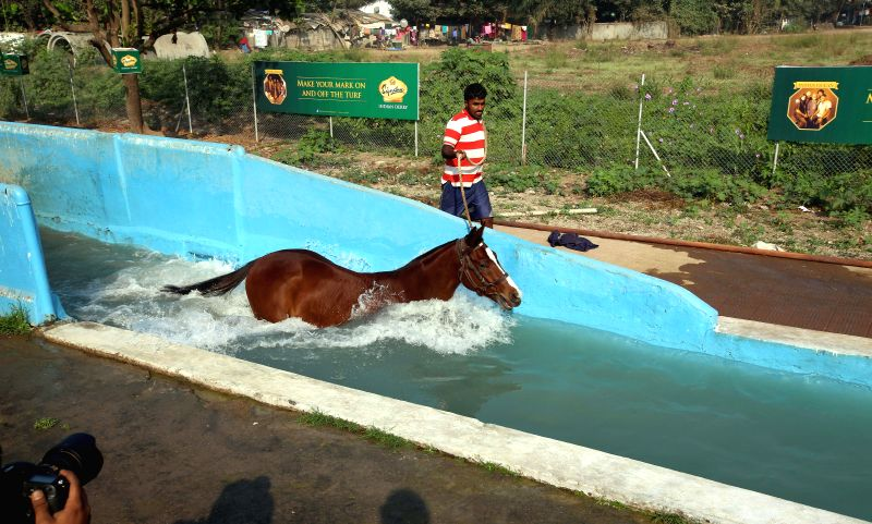 Horse being trained at Mahalaxmi Race Course in Mumbai on Jan. 29, 2015.