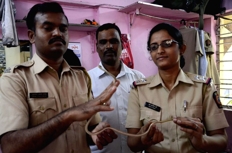 Maharashtra Police personnel rescued a bronze back tree snake which is 3 feet at Mahim Police Colony in Mumbai on Feb 5, 2015.
