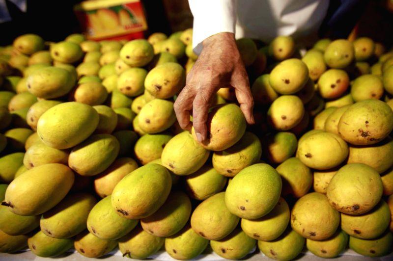 Mangoes arrive in Mumbai markets.