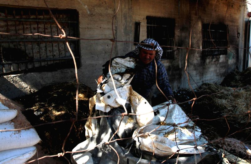 A Palestinian farmer inspects his vandalized property allegedly burnt by Jewish settlers in the village of Aqraba, near West Bank city of Nablus, July 2, ...