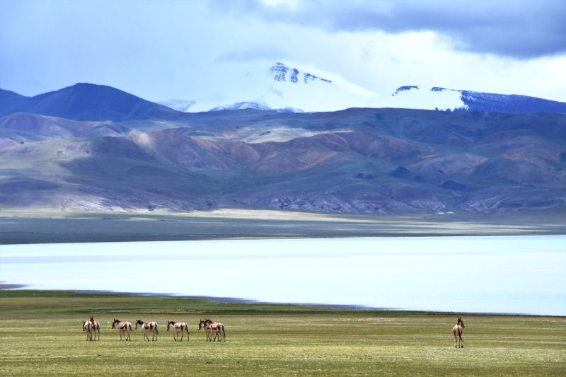 NAGQU, Aug. 4, 2018 - Wild Tibetan asses stroll in the Qiangtang state-level nature reserve in Gacuo Township of Shuanghu County under Nagqu City, southwest China's Tibet Autonomous Region, Aug. 3, ...