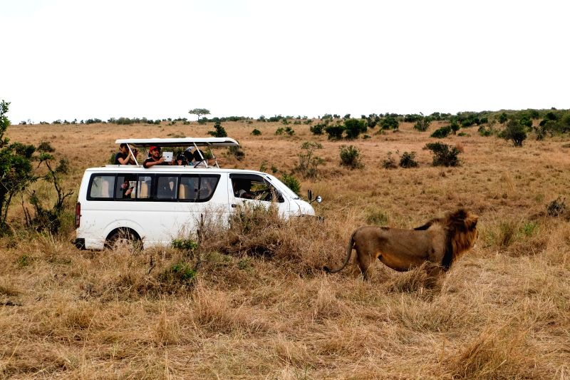 NAIROBI, July 27, 2016 - Tourists take photos of a lion at Maasai Mara National Reserve, Kenya, July 24, 2016. Kenya has recorded minimal wildlife attacks on humans inside parks and game reserves ...