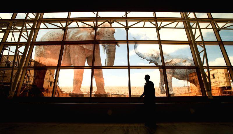 A man walks past the window with elephant pattern at the new terminal of Jomo Kenyatta International Airport (JKIA) in Nairobi, capital of Kenya, July 4, 2014. The ..