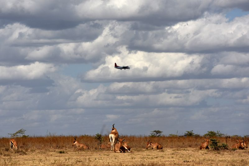 "A plane flies over a herd of antelopes at Kenya's Nairobi National Park in Nairobi, Kenya, March 21, 2015. Kenya's ""long rains"" season which usually ..."