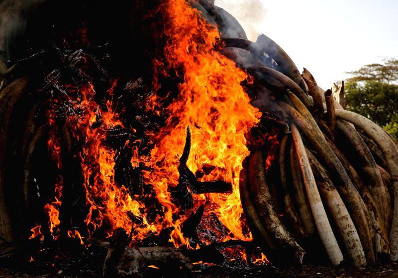 Photo taken on March 3, 2015 shows the site of burning contraband ivory in Nairobi, Kenya. Kenyan President Uhuru Kenyatta on Tuesday set ablaze 15 tonnes of ...