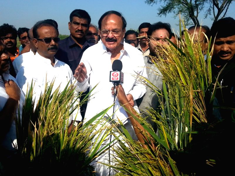 The Union Minister for Urban Development, Housing and Urban Poverty Alleviation and Parliamentary Affairs M. Venkaiah Naidu addresses press while inspecting damaged paddy fields, at ... - M. Venkaiah Naidu