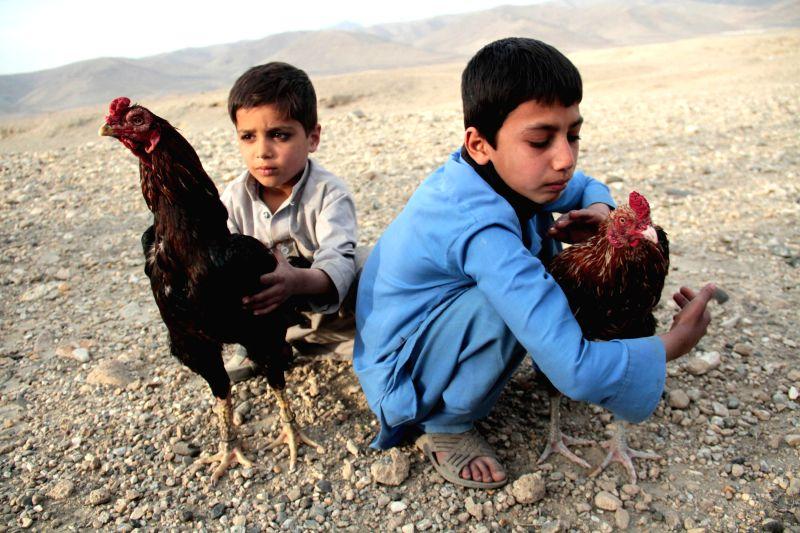 Afghan boys hold their roosters before a cockfighting match in Nangarhar province, eastern Afghanistan, Feb. 6, 2015. (Xinhua/Tahir Safi