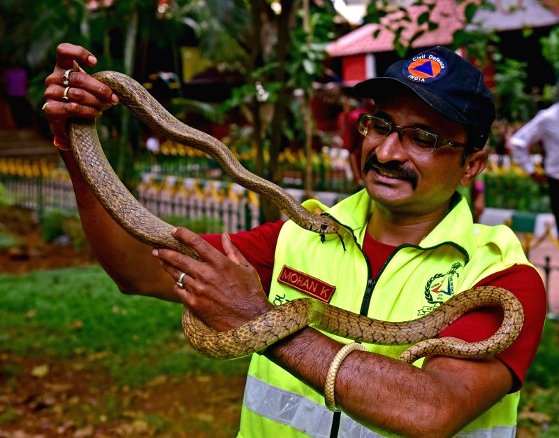 National Civil Defence member rescues a Rat Snake after it was found in the Cubbon Park in Bengaluru on April 18, 2017.