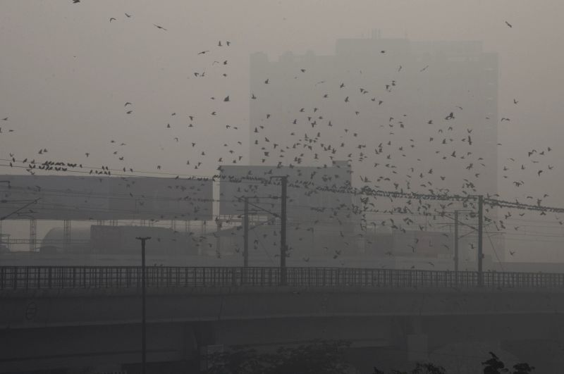 A flock of birds flies in Delhi skies on a foggy morning, on Jan 13, 2015.