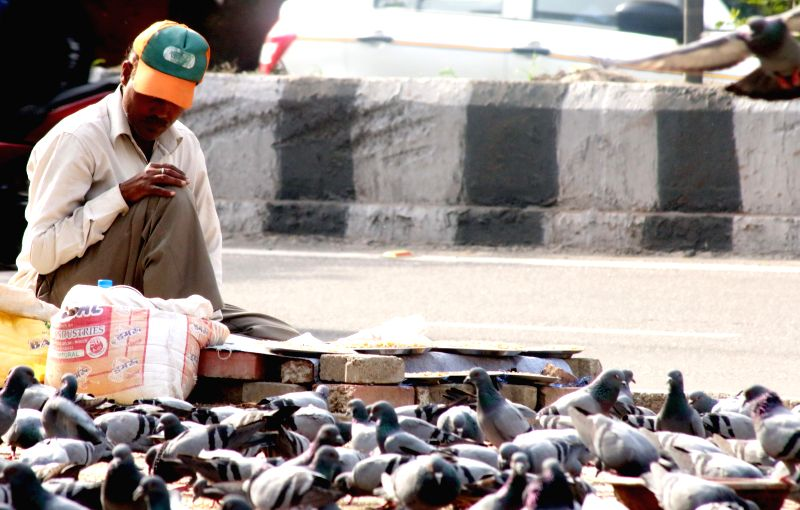 A man feeds pigeons on the footpaths of New Delhi on April 3, 2015.