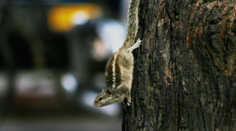 A squirrel on a tree.
